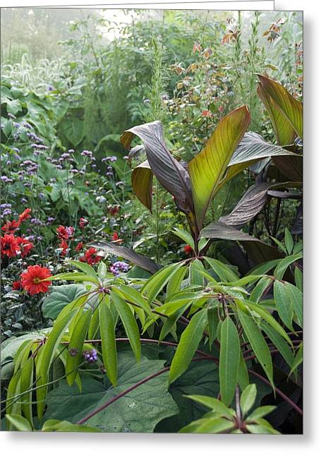 Canna Photographs Greeting Cards - Great Dixter Gardens, UK Greeting Card by Science Photo Library