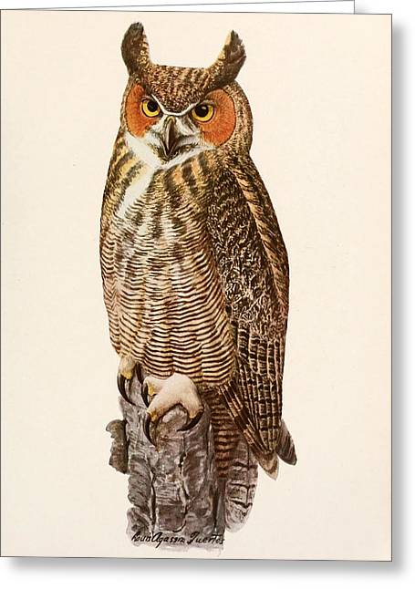 Owl Greeting Cards - Great Horned Owl Greeting Card by Louis Agassiz Fuertes