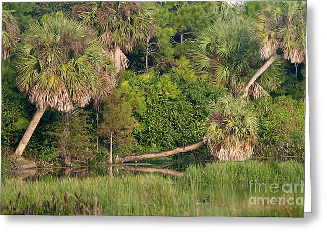 Nature Center Greeting Cards - Green Cay Wetlands, Fl Greeting Card by Mark Newman
