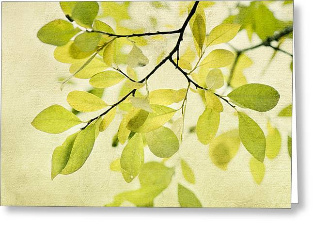 Flora Greeting Cards - Green Foliage Series Greeting Card by Priska Wettstein