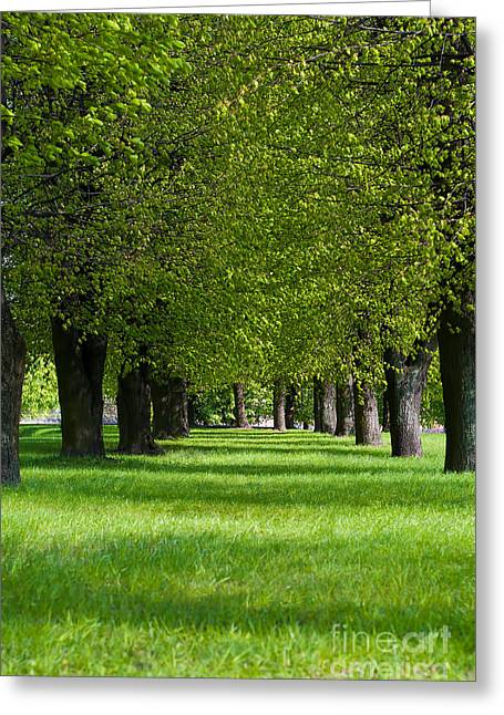 Spring Scenes Greeting Cards - Green Lane In The Park Greeting Card by Aleksey Tugolukov