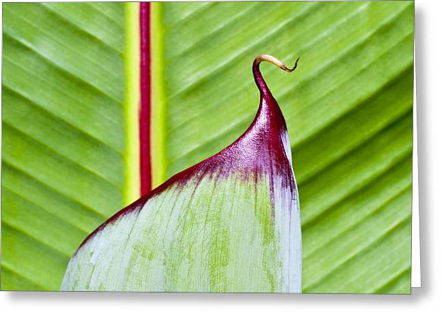Green Leaves Greeting Card by Heiko Koehrer-Wagner