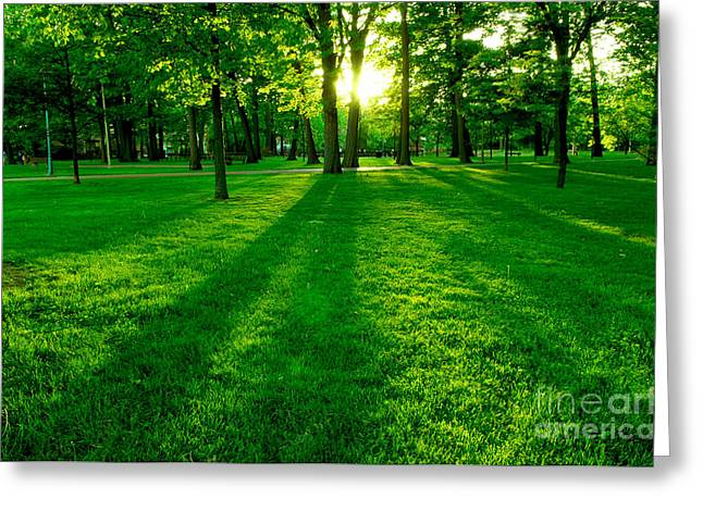 Park Lights Greeting Cards - Green park Greeting Card by Elena Elisseeva