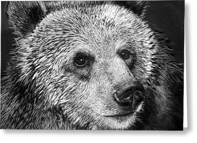 Critically Endangered Animal Greeting Cards - Grizzly Bear Greeting Card by Sharlena Wood