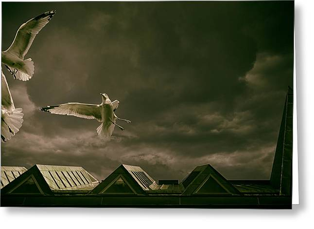 Flying Seagull Greeting Cards - Gulls over Quebec City Greeting Card by Mountain Dreams