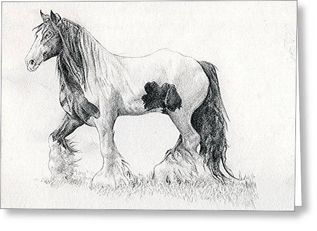 Cob Drawings Greeting Cards - Gypsy Cob Horse Portrait Greeting Card by Olde Time  Mercantile