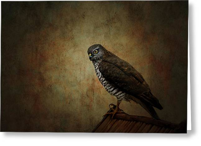 Hunting Bird Greeting Cards - Hawk Greeting Card by Heike Hultsch