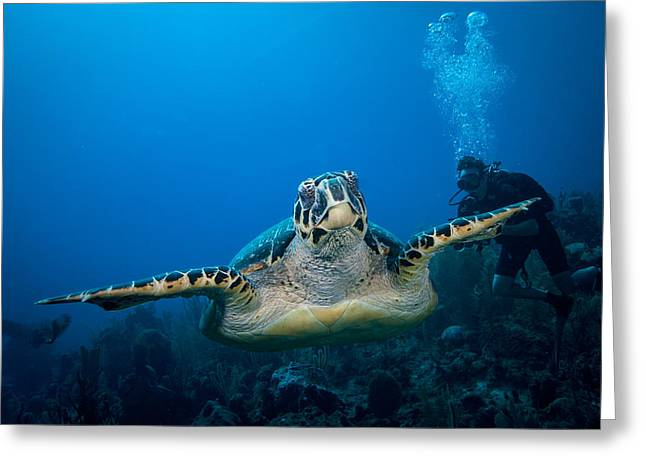 Jean Noren Greeting Cards - Hawksbill Greeting Card by Jean Noren