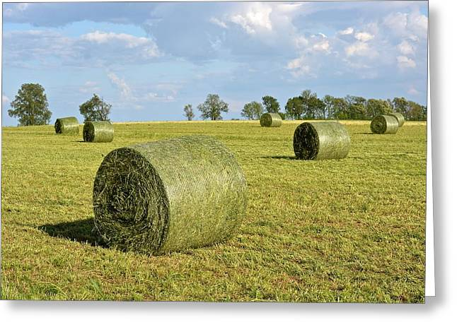 Hay Bales Greeting Cards - Hay Bales In Spring Greeting Card by Tana Reiff