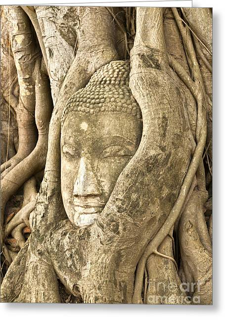 Tree Roots Greeting Cards - Head of Buddha Ayutthaya Thailand Greeting Card by Colin and Linda McKie