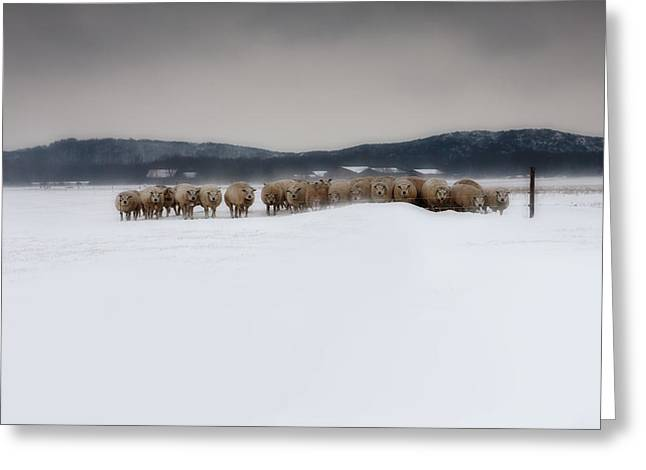 Grazing Snow Greeting Cards - Herd of sheep standing in a snowstorm Greeting Card by Wout Kok