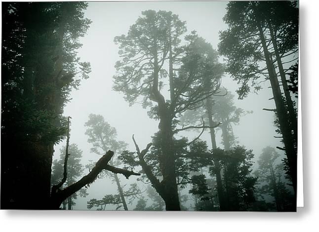 Himalayas Greeting Cards - Himalyas mist Greeting Card by Raimond Klavins