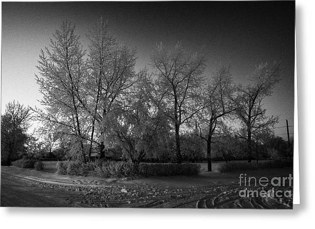 Harsh Conditions Photographs Greeting Cards - hoar frost covered trees on street in small rural village of Forget Saskatchewan Canada Greeting Card by Joe Fox