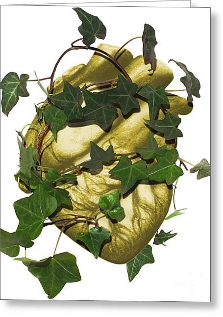 Heart Healthy Photographs Greeting Cards - Holistic Heart Greeting Card by Dennis D. Potokar
