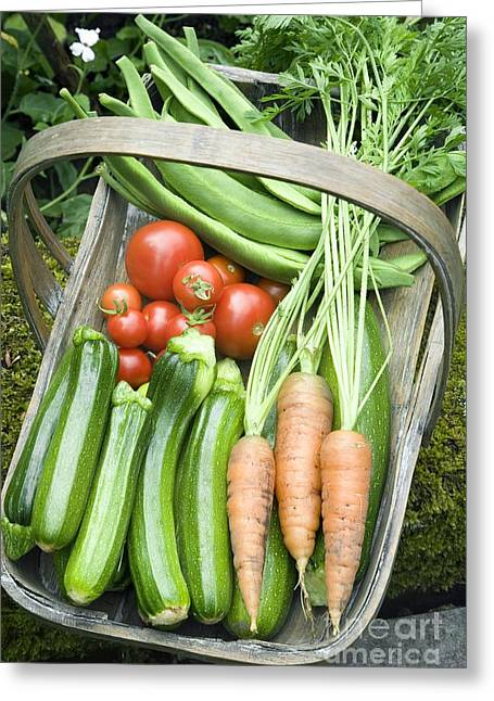 Organically Greeting Cards - Home-grown Organic Vegetables Greeting Card by Sheila Terry