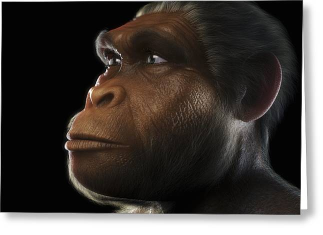 Extinction Greeting Cards - Homo Habilis Greeting Card by Science Picture Co