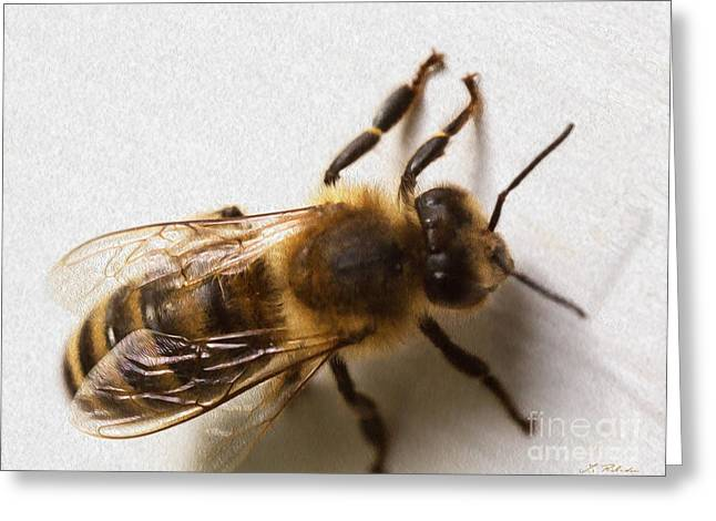 Commercial Photography Greeting Cards - Honey Bee  Greeting Card by Iris Richardson