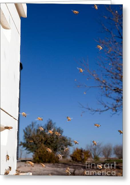Beekeeping Greeting Cards - Honey Bees and Beehive Greeting Card by Cindy Singleton