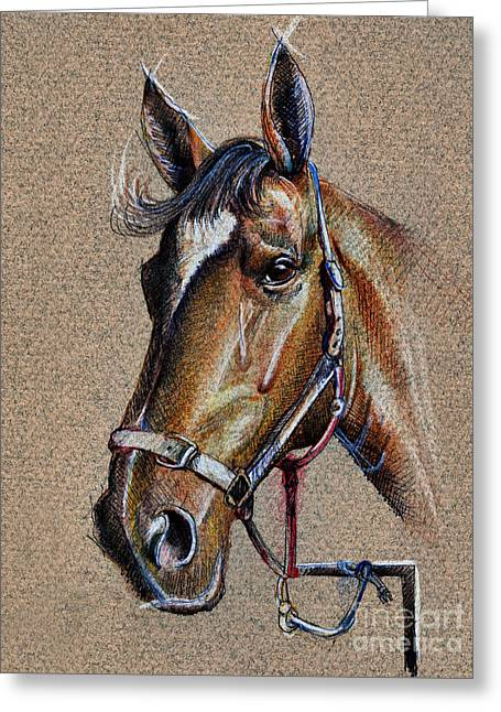 Pencil On Canvas Greeting Cards - Horse Face - drawing  Greeting Card by Daliana Pacuraru