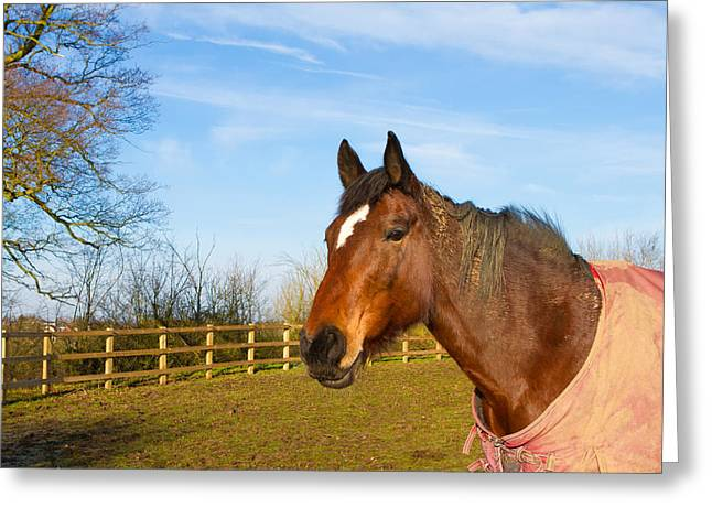 Winter Sports Picture Greeting Cards - Horse in field wearing horse rug Greeting Card by Fizzy Image