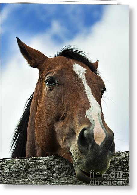 Race Horse Greeting Cards - Horse Greeting Card by John Greim