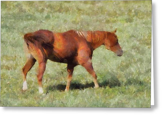 Wild Horses Mixed Media Greeting Cards - Horse On The Farm Greeting Card by Dan Sproul