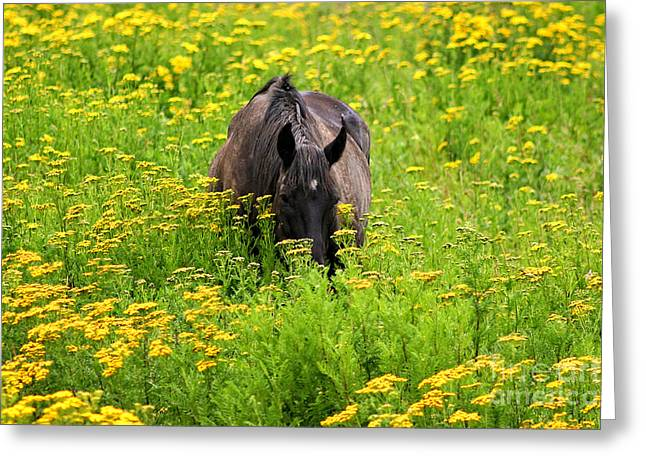 Horse Power Flower Power Greeting Card by Bob Hislop
