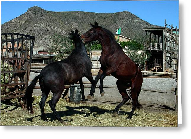 2 Horses In Love Almeria Spain Greeting Card by Colette V Hera  Guggenheim