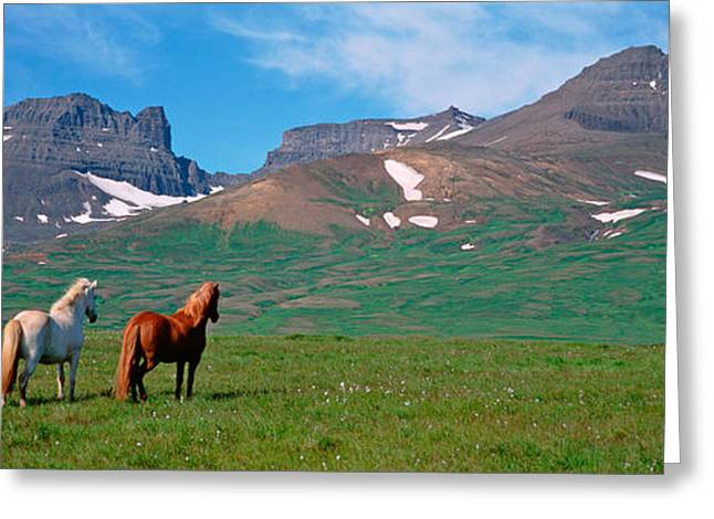 Grazing Snow Greeting Cards - Horses Standing And Grazing In A Greeting Card by Panoramic Images