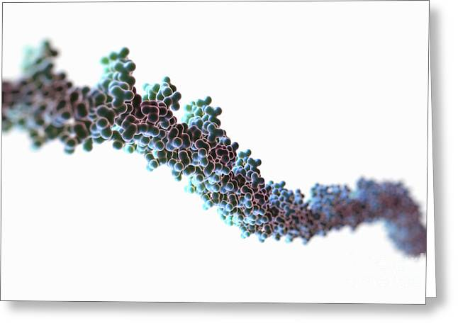 Dna Model Greeting Cards - Human Dna Greeting Card by Science Picture Co