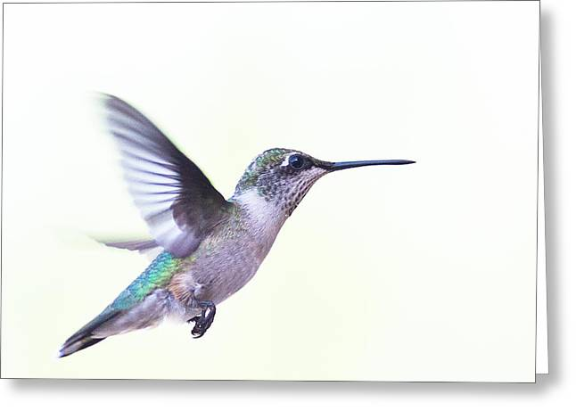 Archilochus Colubris Greeting Cards - Hummer Greeting Card by Annette Hugen