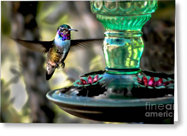 Haybale Greeting Cards - Hummer Greeting Card by Robert Bales