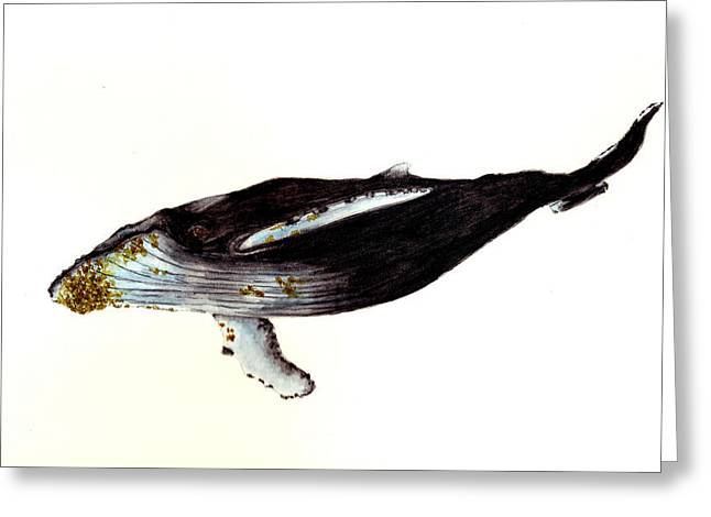 Humpback Whale Paintings Greeting Cards - Humpback Whale Greeting Card by Michael Vigliotti