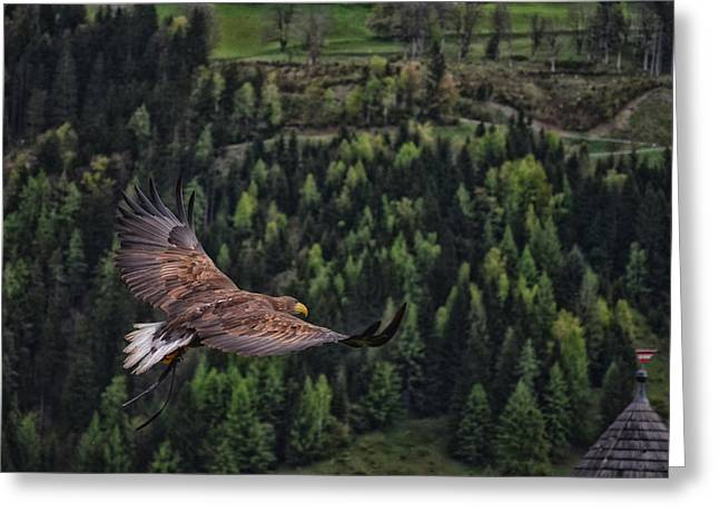 Hunting Bird Greeting Cards - Hunting  Greeting Card by Mountain Dreams