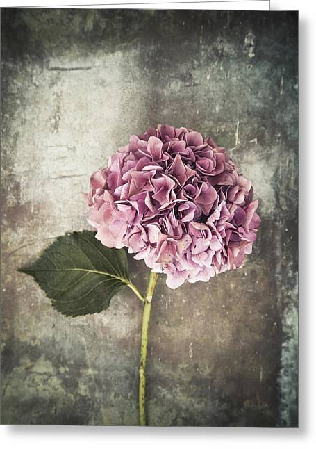 Straps Greeting Cards - Hydrangea Greeting Card by Maria Heyens