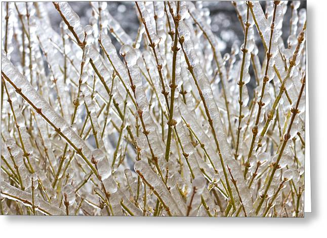 Temperature Greeting Cards - Ice on branches Greeting Card by Blink Images
