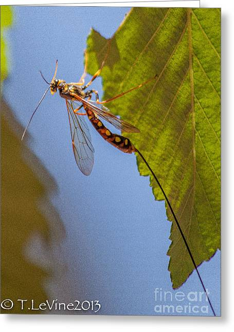 Adult Pastels Greeting Cards - Ichneumon Wasp Greeting Card by Tracey Levine