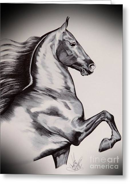 Horse Drawing Greeting Cards - Into the Wind - Saddlebred Greeting Card by Cheryl Poland