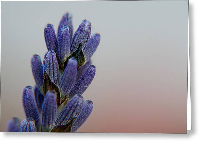 Blue Greeting Card by Dave Byrne