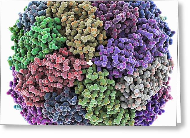 Peptide Greeting Cards - Iron containing protein, molecular model Greeting Card by Science Photo Library