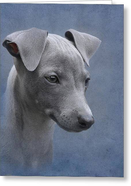 Greyhound Dog Greeting Cards - Italian Greyhound Puppy Greeting Card by Angie Vogel