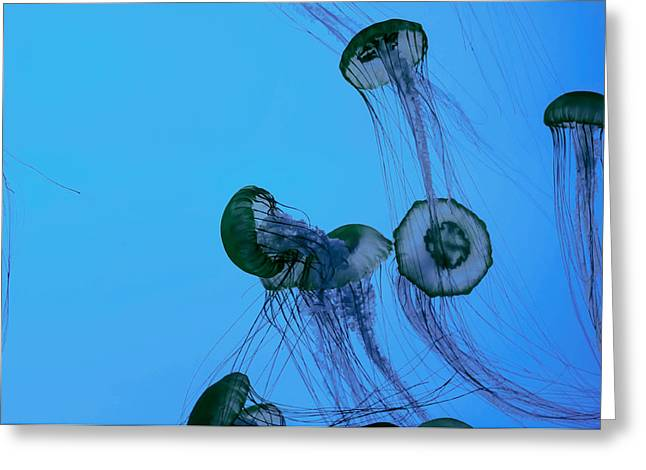 Analog Greeting Cards - Jellyfish Array Greeting Card by Mountain Dreams