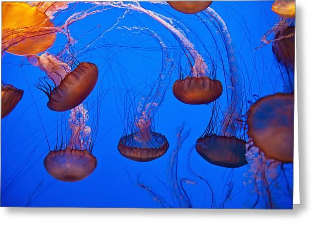 Medusa Greeting Cards - Jellyfish In Aquarium California, Usa Greeting Card by Paul Quayle