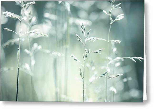 New Life Greeting Cards - June green grass flowering Greeting Card by Elena Elisseeva