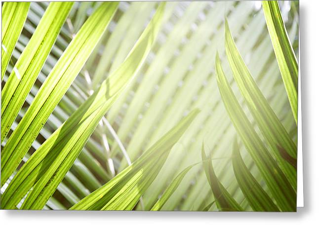 Tropical Vegetation Greeting Cards - Jungle leaves Greeting Card by Les Cunliffe