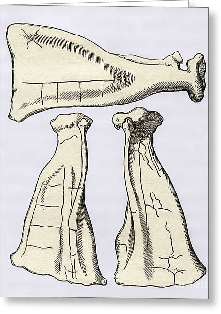 Foretelling Greeting Cards - Kalmyk Bone Divination Scapulas, Artwork Greeting Card by Sheila Terry