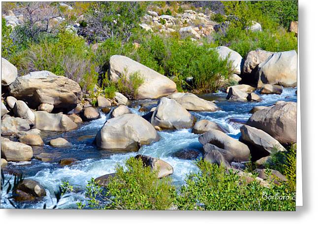 Kern River Study Greeting Card by Barbara Snyder