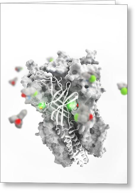Hallucination Greeting Cards - Ketamine drug binding to ion channel Greeting Card by Science Photo Library