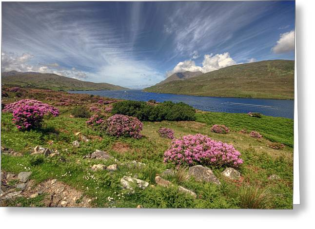 County Galway Greeting Cards - Killary Fjord Greeting Card by John Quinn