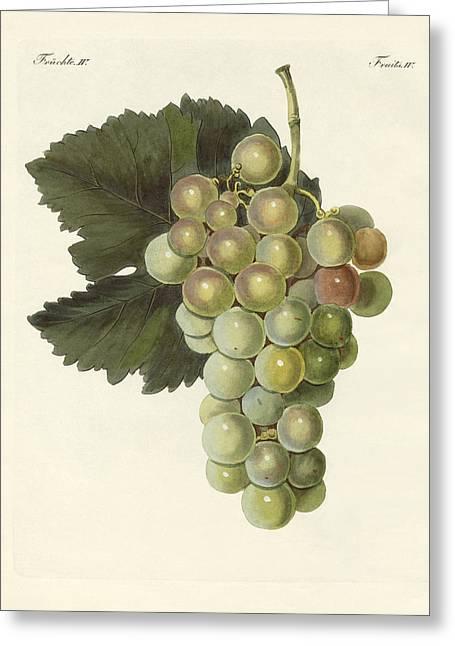 Grape Vine Drawings Greeting Cards - Kinds of vines Greeting Card by Splendid Art Prints